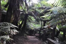 tasmanien1